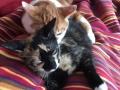 Banjo und Leonie_Katzen_05